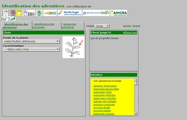 Identification des adventices