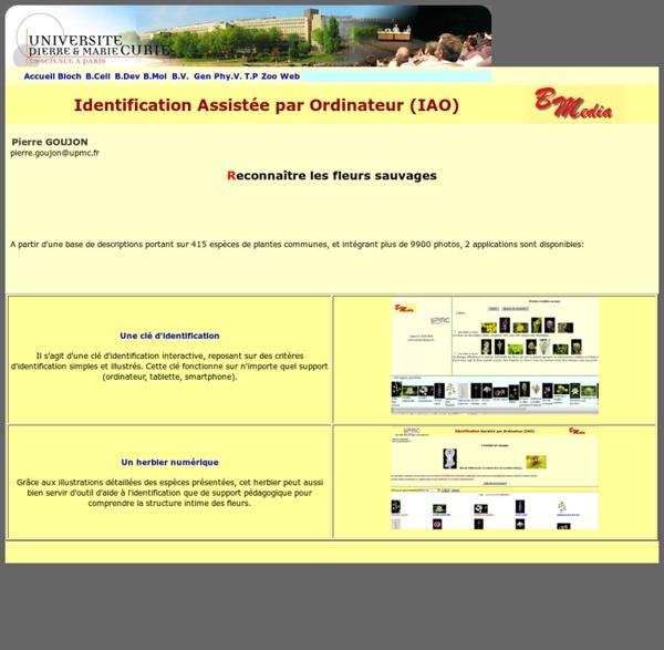 Identification Assistée par Ordinateur (IAO)
