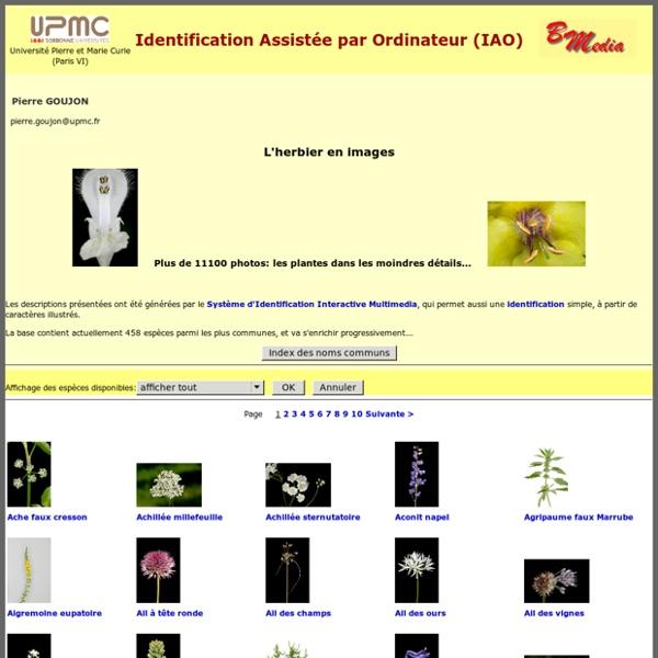 Herbier en ligne