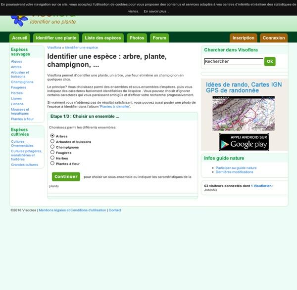 Identifier une espèce : arbre, plante, champignon, ...