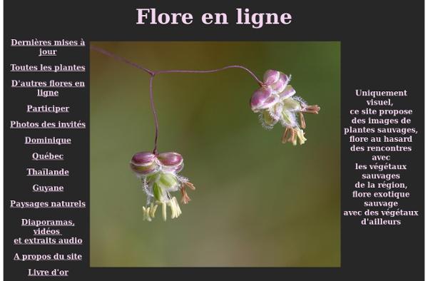 Flore en ligne