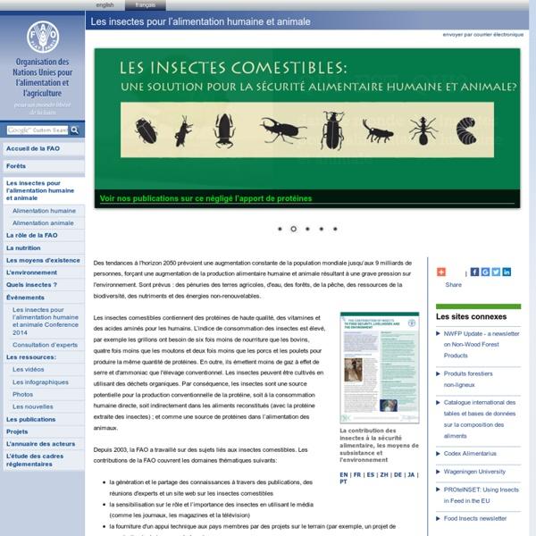 Les insectes comestibles issus de la forêt