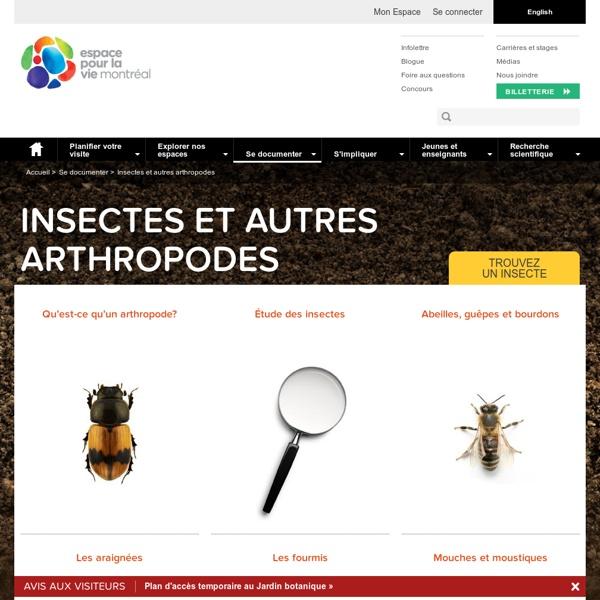La toile des insectes du Québec (Insectarium de Montréal)