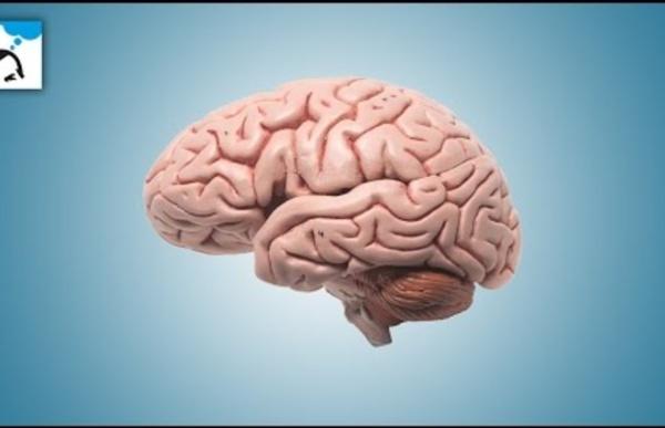 Dix choses insensées que votre cerveau sait faire sans e-penser
