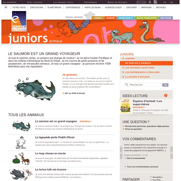 Juniors - Animaux