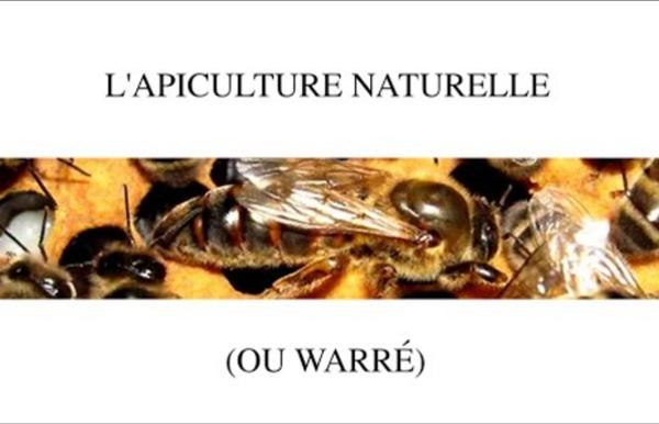 L'apiculture en warré