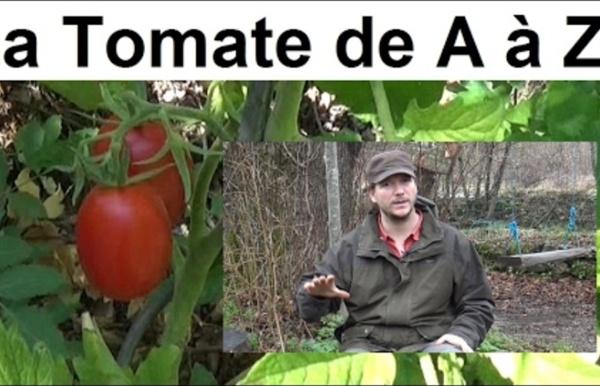 La Tomate de A à Z (presque)