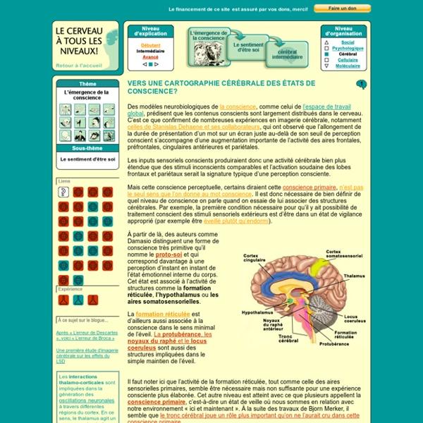 Cortex cingulaire : LE CERVEAU À TOUS LES NIVEAUX!