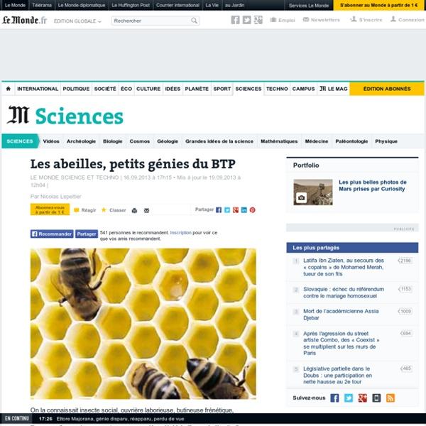 Les abeilles, petits génies du BTP