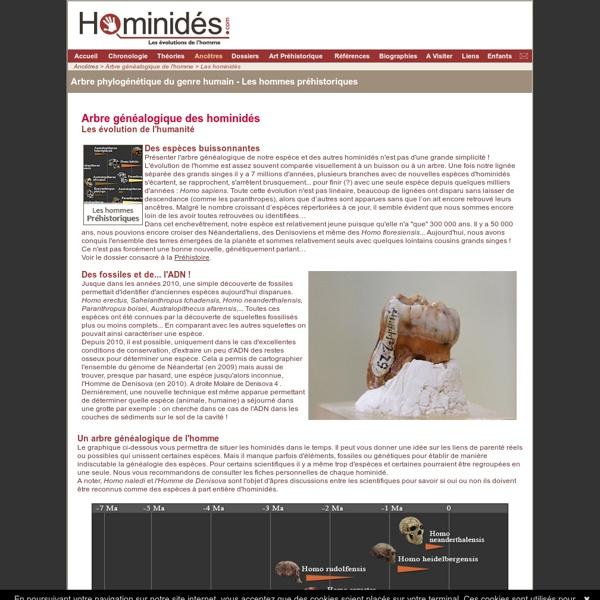 Arbre phylogénétique - Les ancêtres de l'homme