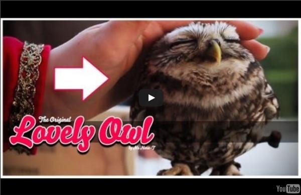 Petting an owl
