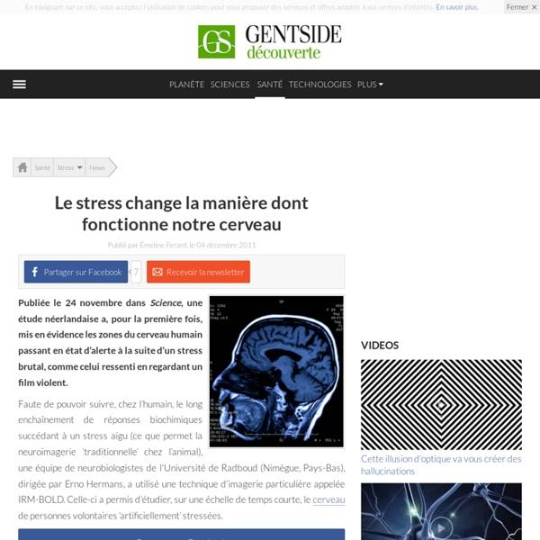Le stress change la manière dont fonctionne notre cerveau