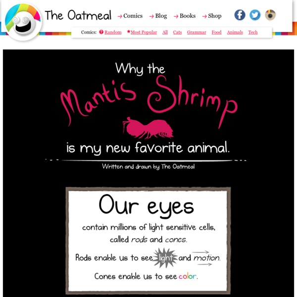 Why the mantis shrimp is my new favorite animal