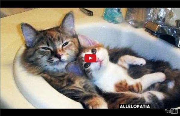 Śmieszne Koty 2016 filmy - Kompilacja #1