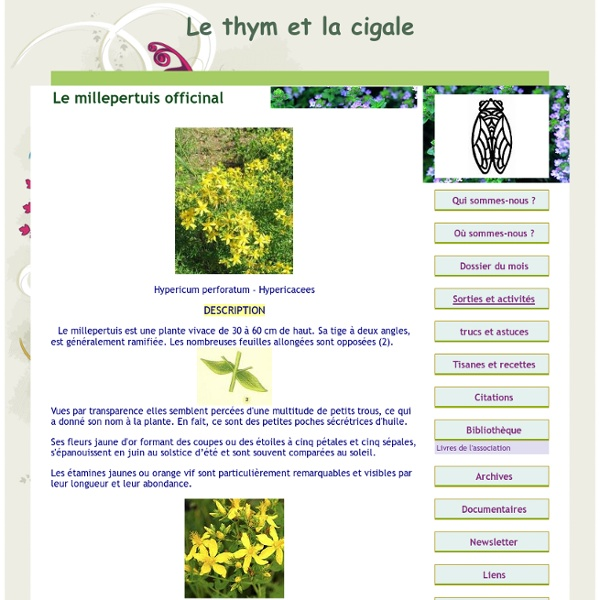 Le millepertuis officinal brûlures inflamations