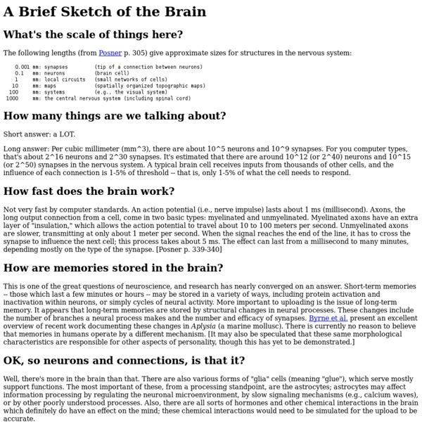 Mind Uploading: Brain Facts