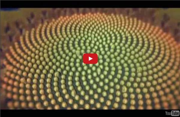 The Miracle of 528 Hz Solfeggio and Fibonacci numbers
