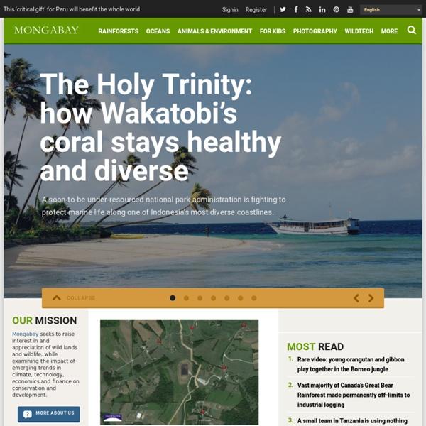 Rainforest - mongabay.com