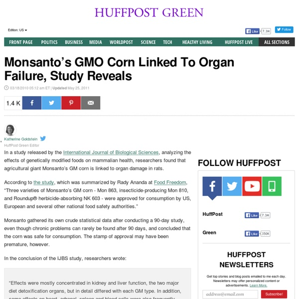 Monsanto's GMO Corn Linked To Organ Failure, Study Reveals