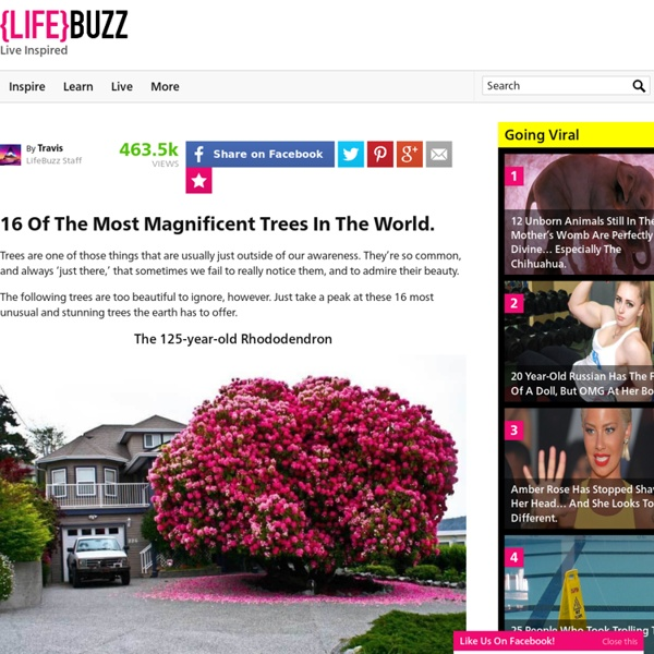 16 Of The Most Magnificent Trees In The World.