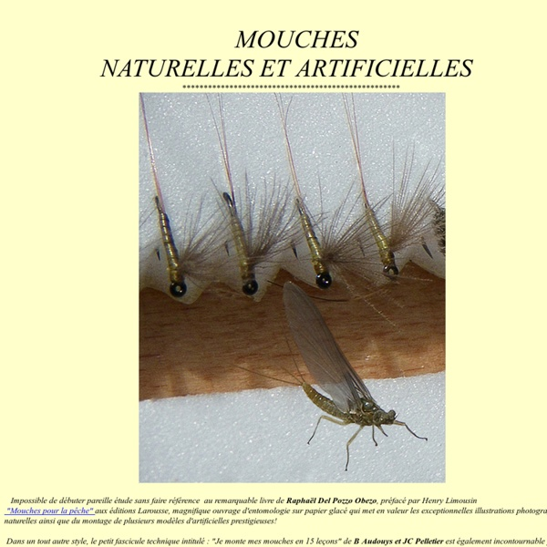 MOUCHES