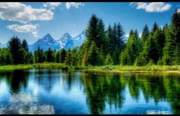 1 H de musique relaxante: Chant des oiseaux et bruit de la forêt.