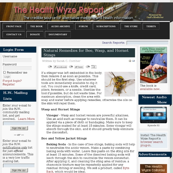 Natural Remedies for Bee, Wasp, and Hornet Stings