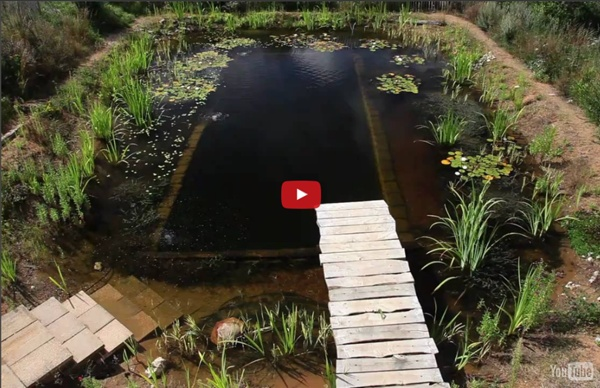 Natural Pools - Natural Pool selfbuild