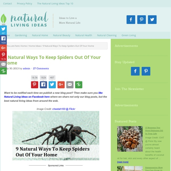 9 Natural Ways To Keep Spiders Out Of Your Home