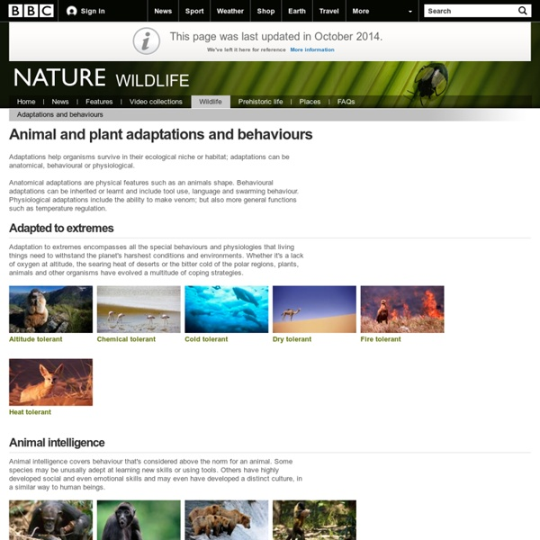BBC Nature - Adaptations and behaviours