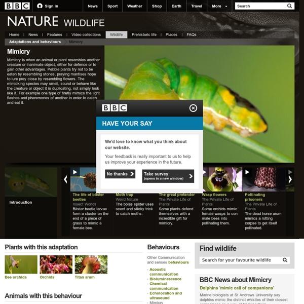 BBC Nature - Mimicry