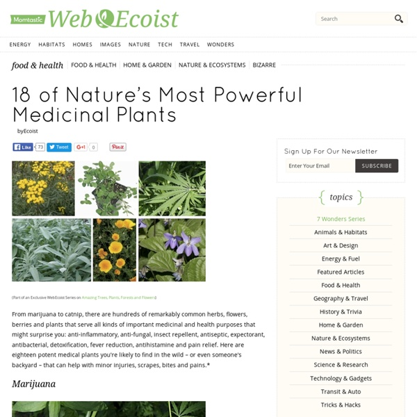 18 of Nature's Most Powerful Medicinal Plants