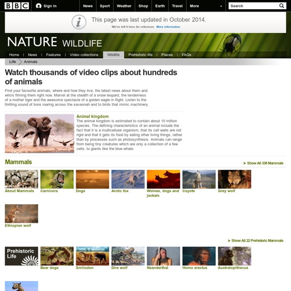 BBC Nature - Video clips of your favourite animal