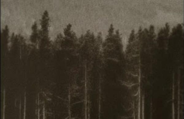 Neroche - Earth Druid
