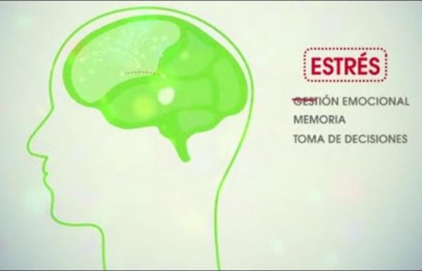 Neuroeducación: por otra escuela.