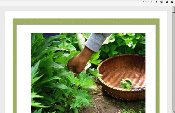 Numen: Healing Power Of Plants (PDF)
