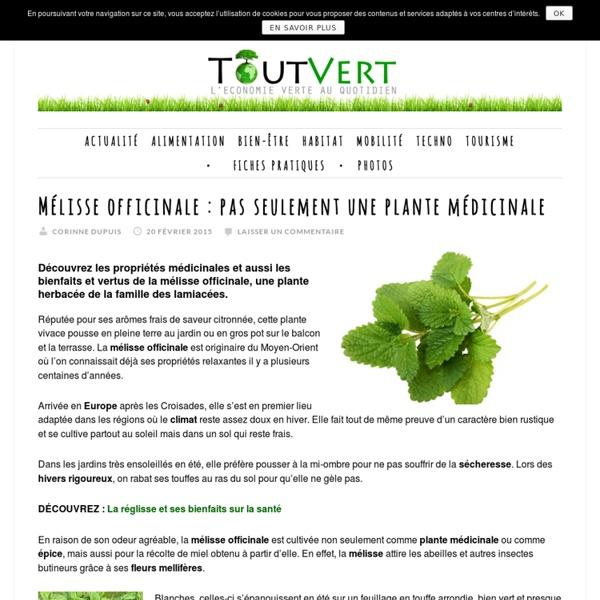 Mélisse officinale : pas seulement une plante médicinale