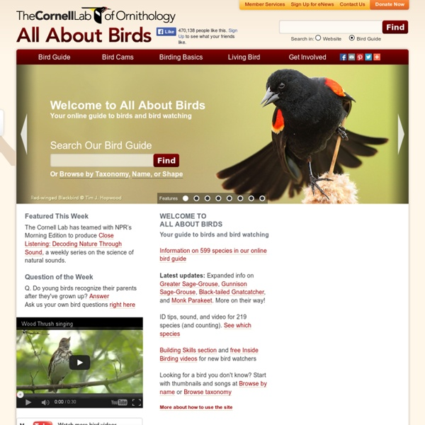 Your online guide to birds and bird watching