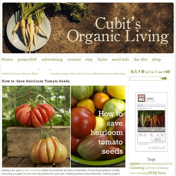 Cubit's Organic Living » How to: Save Heirloom Tomato Seeds