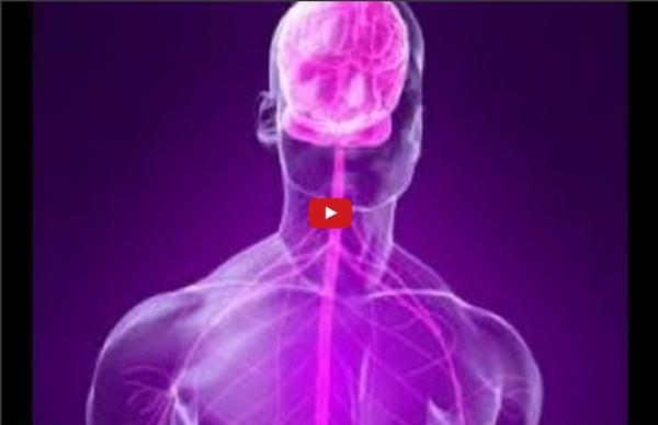 01 Organisation générale du système nerveux central et périphérique