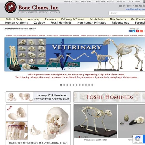Bone Clones Inc. Osteological Replicas