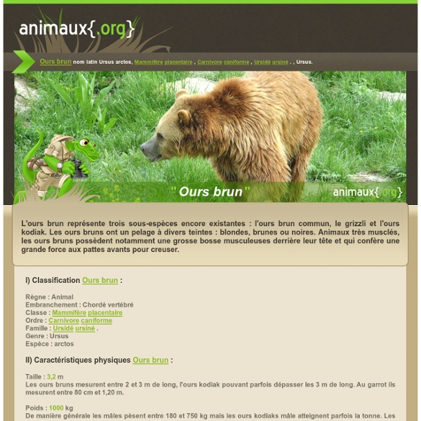L'ours brun 12
