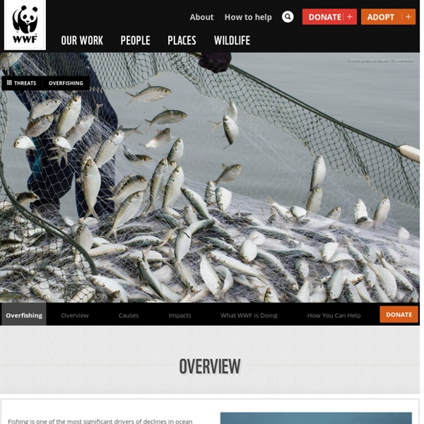 What is Overfishing? Facts, Effects and Overfishing Solutions