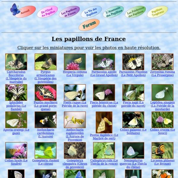 Les papillons de France - plus de 100 especes en photos