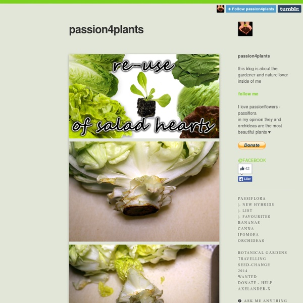 Passion4plants — re-use of salad/lettuce hearts :) first cut it...