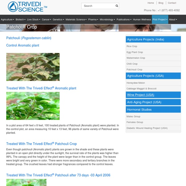 The Trivedi Effect Impact on Patchouli Plant Cultivation