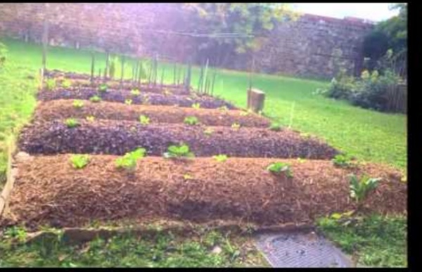 Permaculture : création et évolution d'une butte autofertile