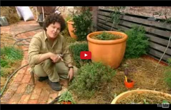 Backyard Permaculture: Starting at home...