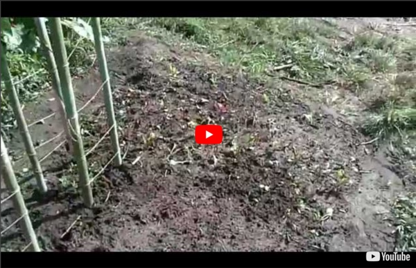 Permaculture et jardin bio-intensif