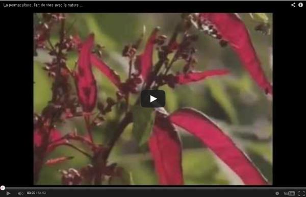 La permaculture, l'art de vivre avec la nature (arte)